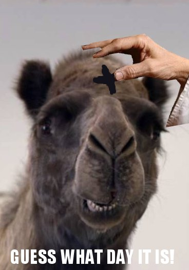 It's Ash Wednesday, camel.