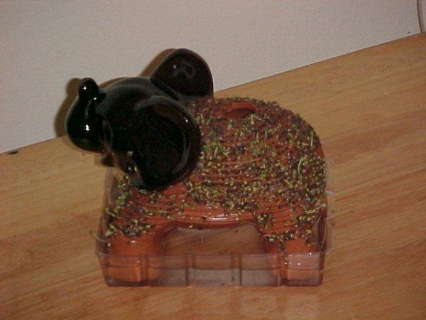 20020106chia005