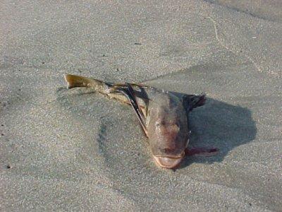20030630fish