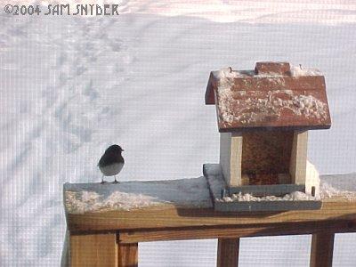 20040128birds3