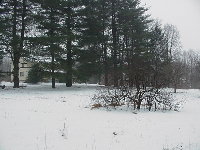 20070214snownewhouse012