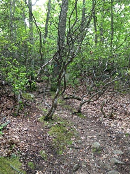 On the Highlands Trail near Headley Overlook